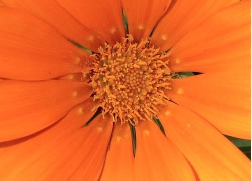 en_plena_floracion