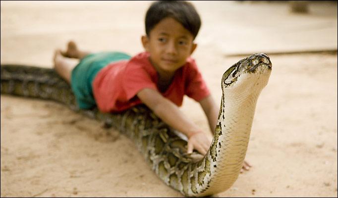 Amigo serpiente