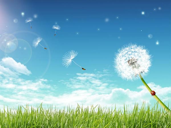 """Un evento de la Tensegridad® de Carlos Castaneda: Continuando : """" Viendo nuestras posibilidades; Vivimos nuestros sueños"""" Junio 2012"""