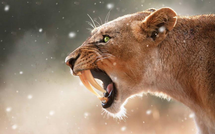 El Tigre Dientes de Sable – Domingo 4 de Marzo